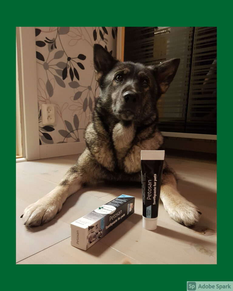 Gråhunden Anja med en förpackning Petosan tandkräm framför sig.