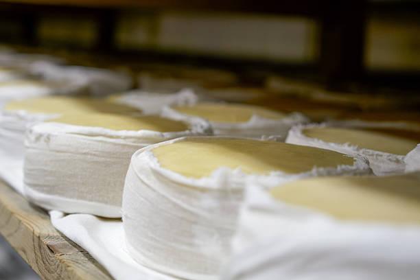 queso fresco puro de oveja