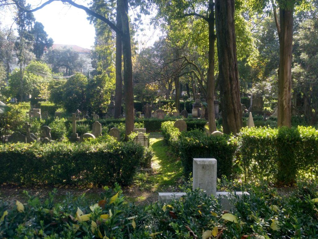 exuberante_vegetacion_tranquilo_cementerio
