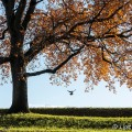 Herfstkleuren in Naarden Vesting