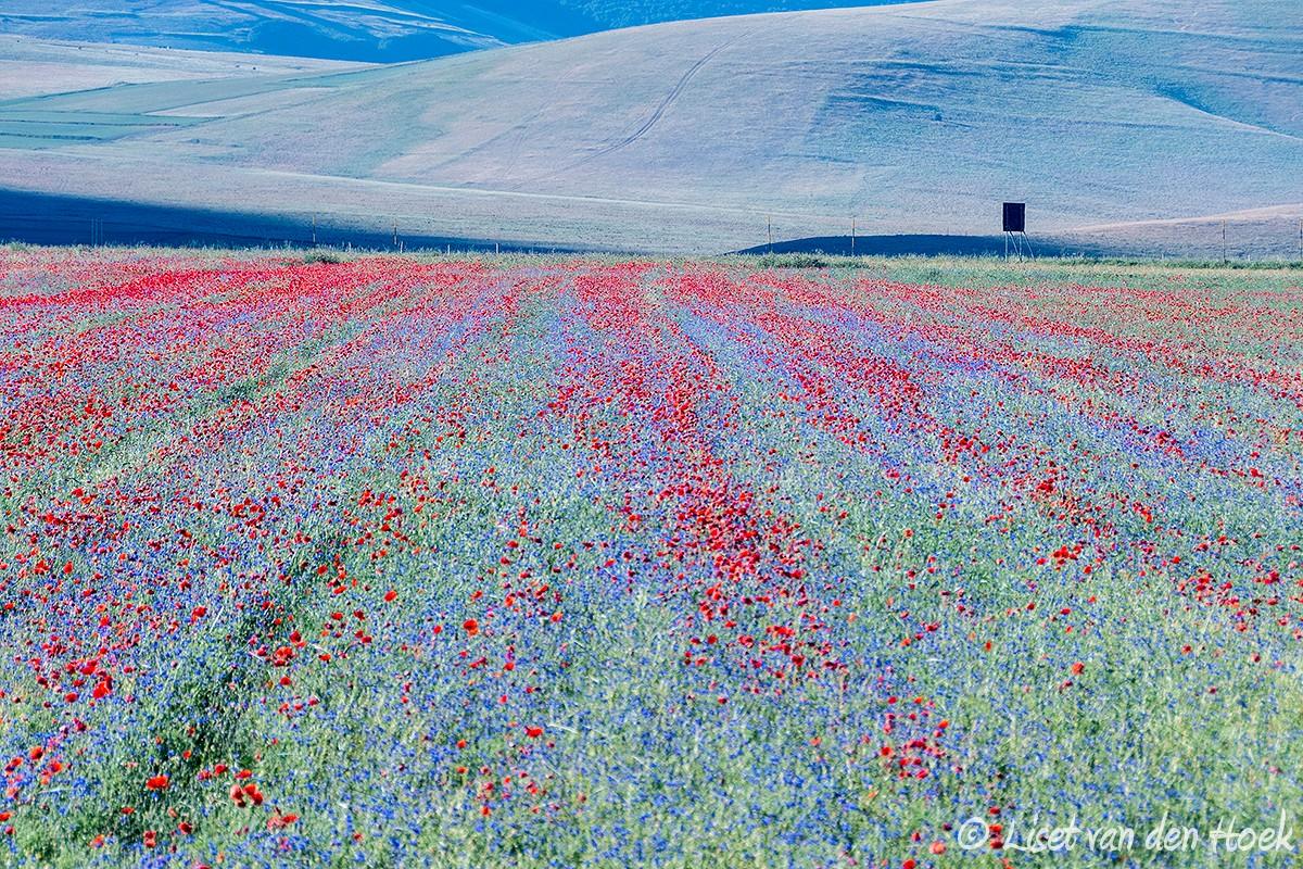 Monte Sibillini NP, Italië