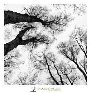 grafische bomen