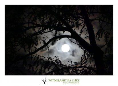 zie de maan schijnt