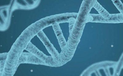 DNA-detektiv på vildtkødmarkedet