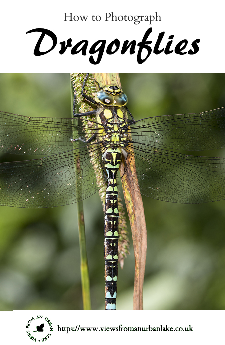 How to Photograph Dragonflies - A guide to photographing Odonata, Dragonflies and Damselflies.