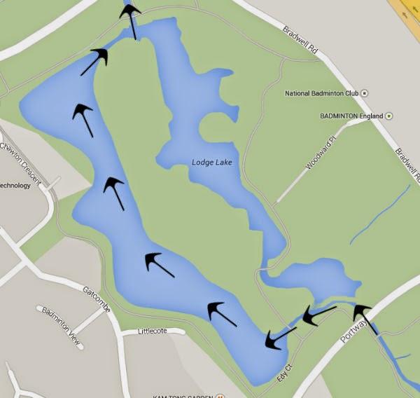Lodge Lake water flow map - lack of waterbird diversity on lodge lake