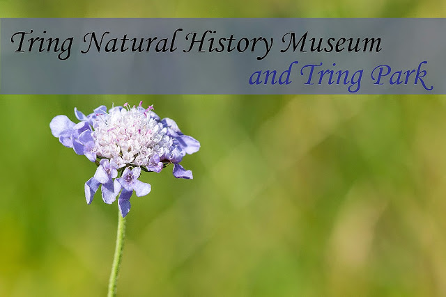Tring Museum and Tring Park