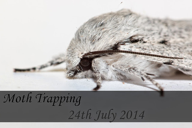 Moth Trapping Overnight