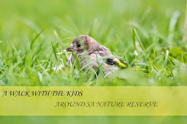 A Nature Reserve Walk with the Kids - Young Goldfinch - Stony Stratford Nature Reserve