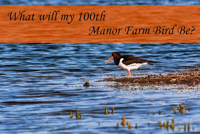 What will be my 100th Manor Farm Bird?