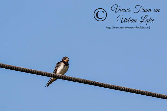 Swallow - Wolverton Mill, Milton Keynes = First No Kids Walk