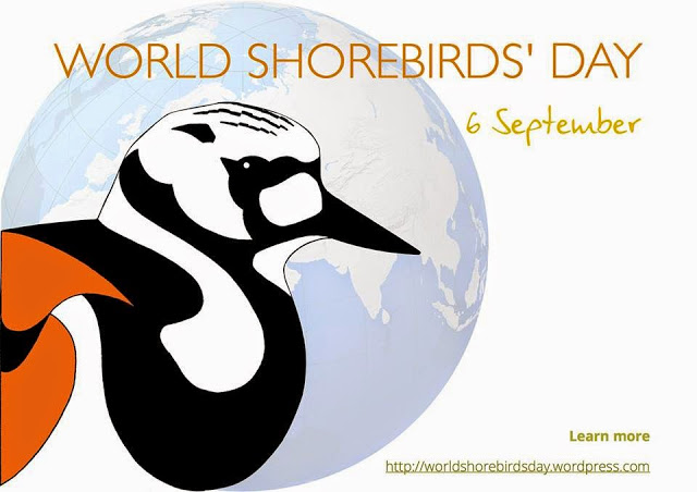 World Shorebirds Day 6th Sept