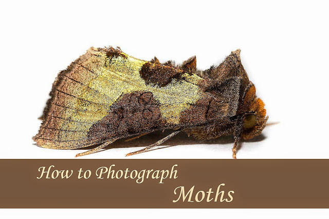 How to Photograph Moths