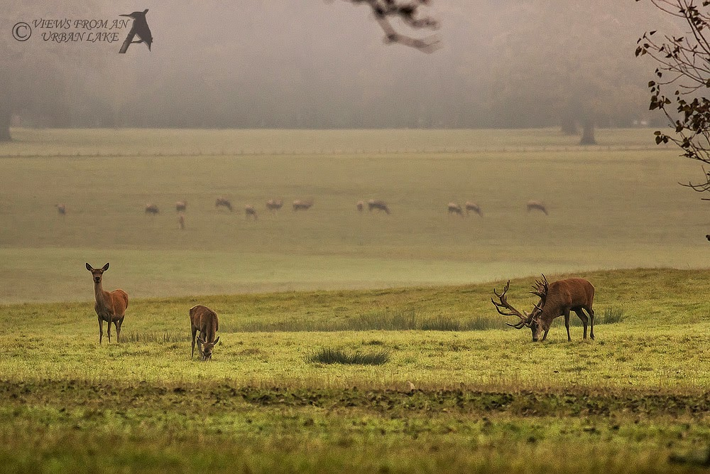 Landscape of Red Deer