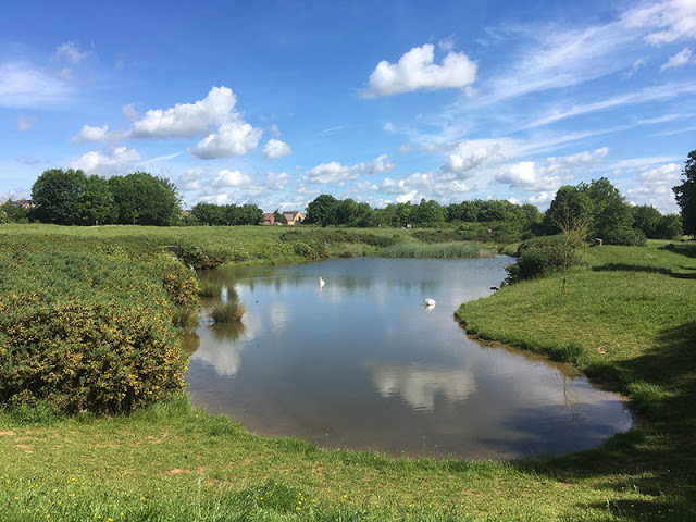Large Pond at Stonepit Fields