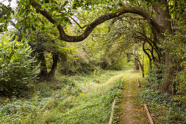 Tunnel of trees on the walk from Buckingham to Milton Keynes