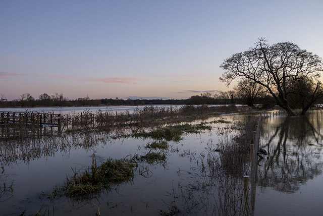 Floodwaters of the Floodplain Forest