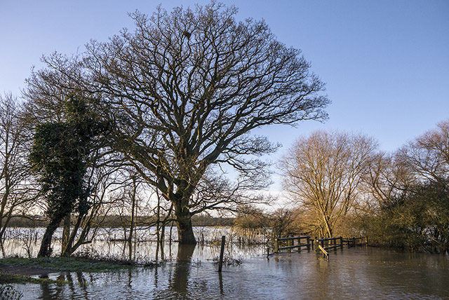 Ouse Valley Floods - Trees below Aqueduct