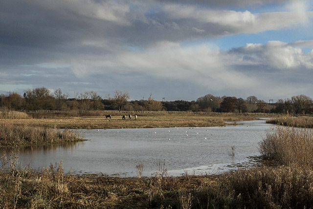 Winter has Arrived at the Floodplain Forest, views over the part frozen water