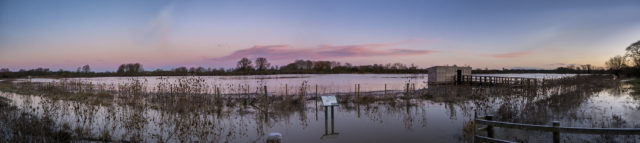 Panoramic of the Floodplain Forest Nature Reserve