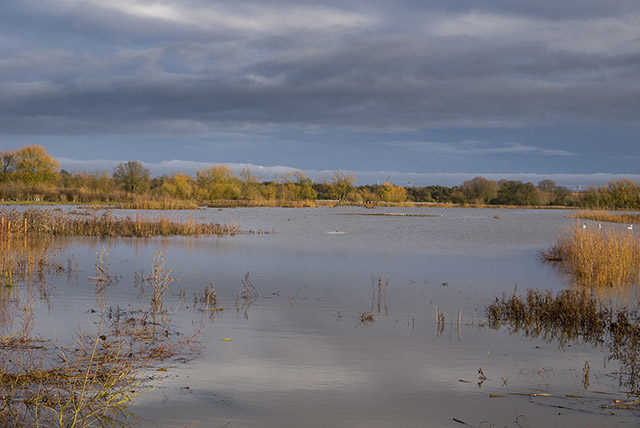 High water at the Floodplain Forest Nature Reserve. Weird lighting I think.