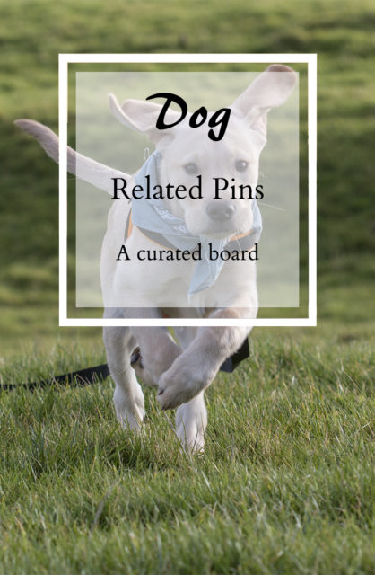 Dog Related Pins