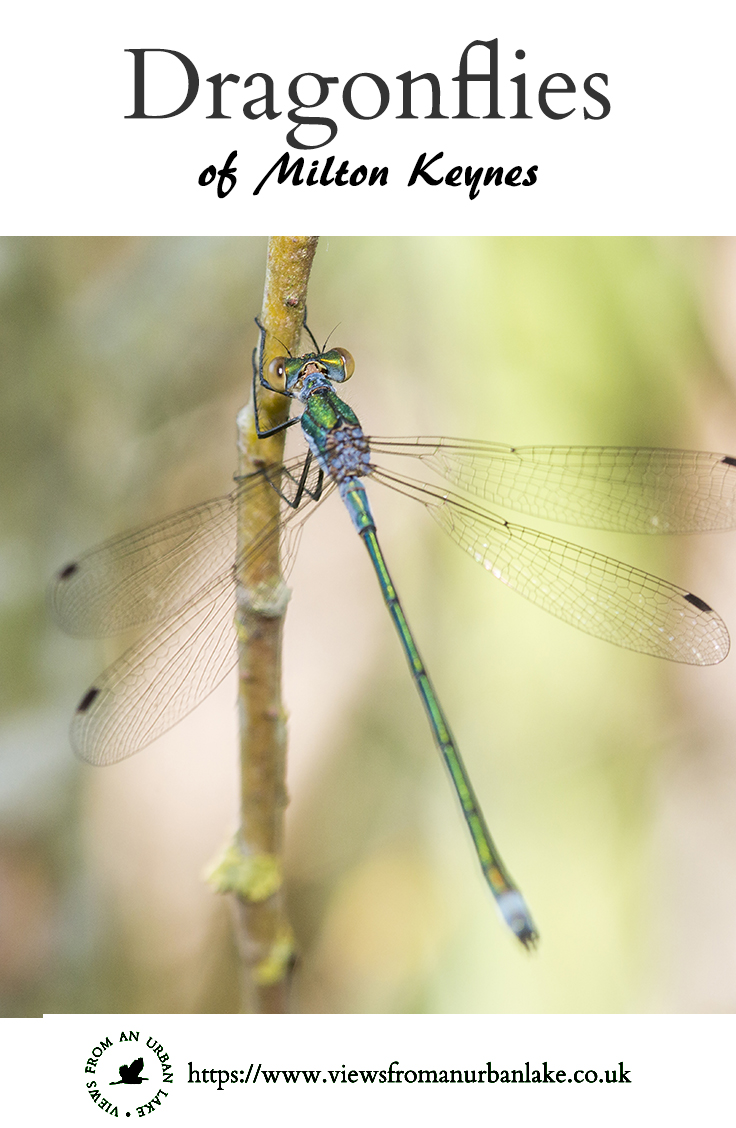 Dragonflies of Milton Keynes - A collection of the Dragonfly species that can be found in Milton Keynes