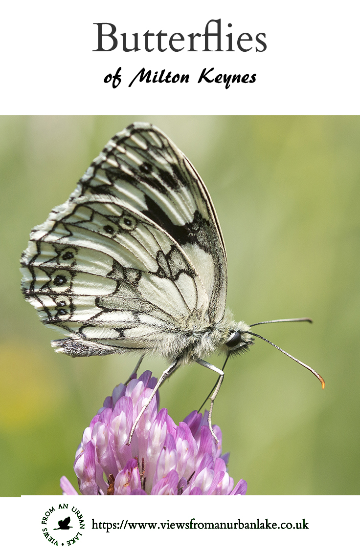 Butterflies of Milton Keynes - A photographic collection of the butterflies that can be found in Milton Keynes