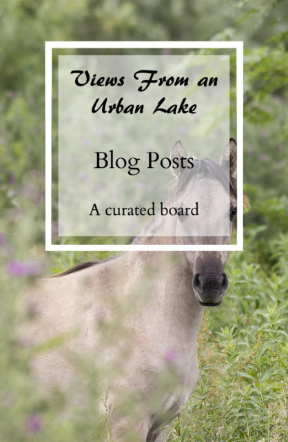 Views From an Urban Lake Blog Posts