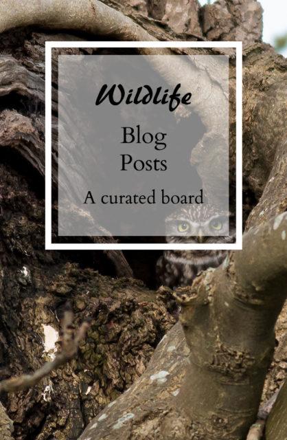 Wildlife Blog Posts