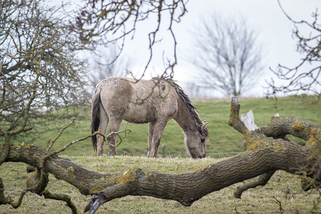 Another natural frame, this time framing a Konik Pony