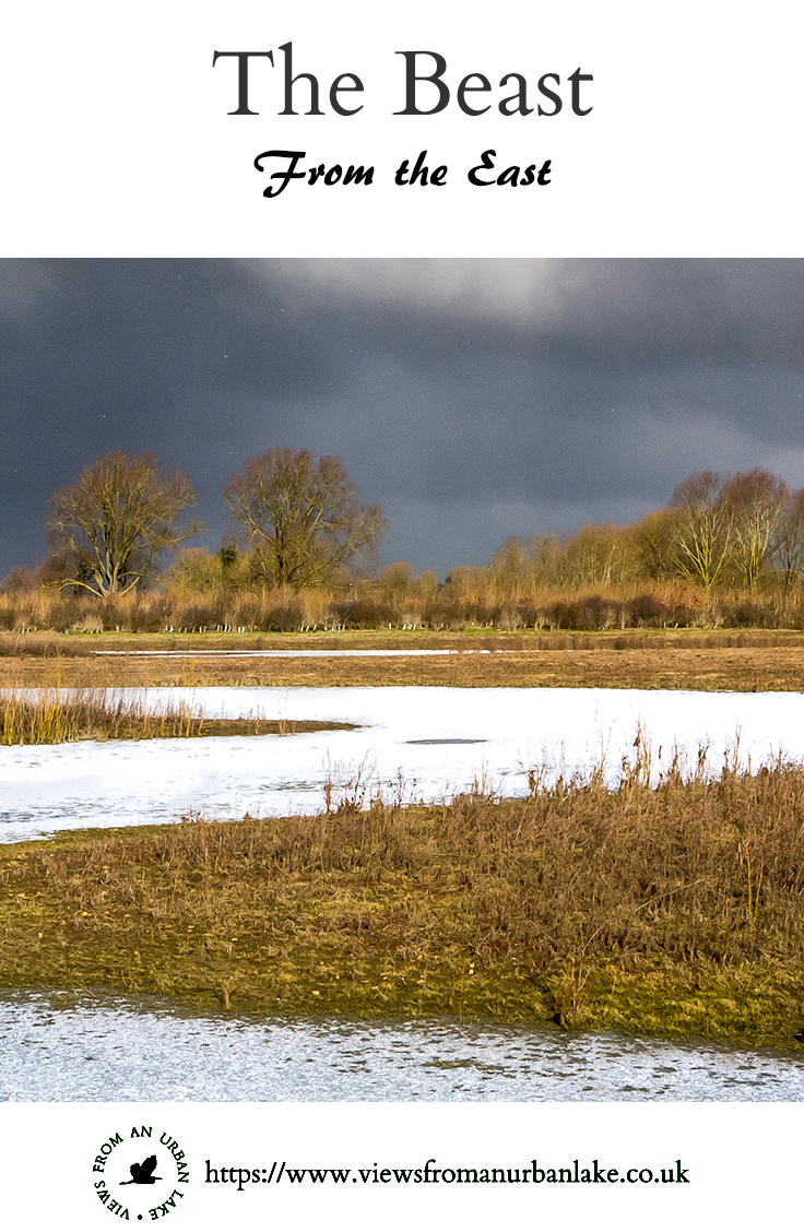 The Beast From the East - A walk around the Floodplain Forest Nature Reserve while the UK is gripped by serious snow.