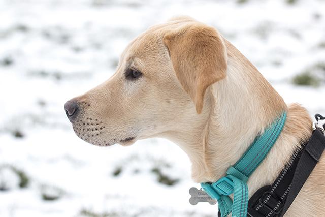 Colin in the Snow