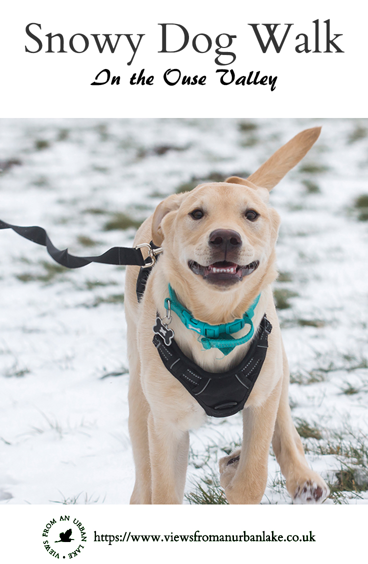 Snowy Dog Walk - A 2.5 mile walk through the Ouse Valley in the Snow, accompanied by Colin the Labrador.