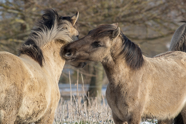 A tender moment between two horses