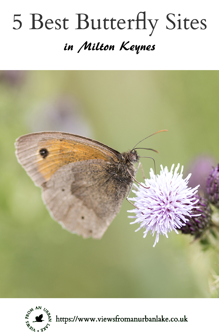 5 Best Butterfly Sites in Milton Keynes - My guide to the best places to see butterflies around MK