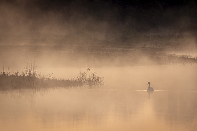 Morning at the Floodplain Forest