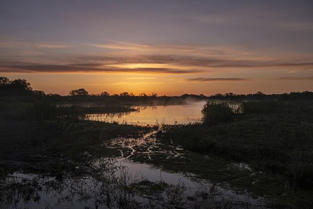 Sunrise over the Floodplain Forest