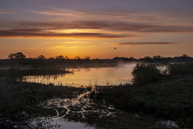Sunrise over the Floodplain Forest with mists