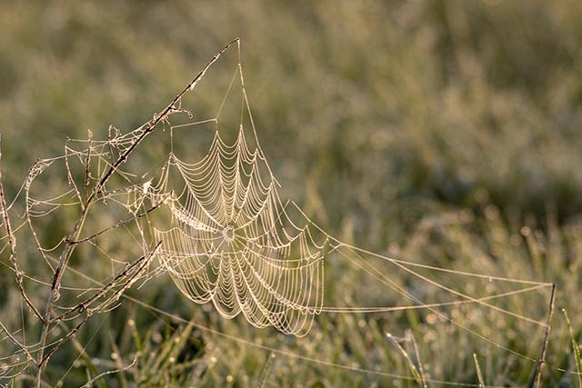 Spiders Web in the sun