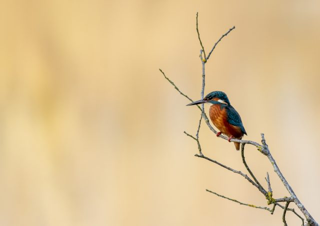 Kingfisher - What birds hold special meaning to you?
