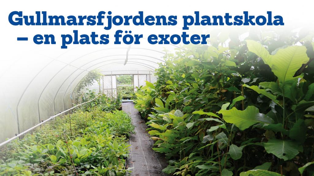 Gullmarsfjordens plantskola – en plats för exoter