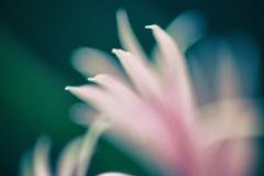 flower-13
