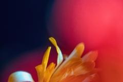 flower-40