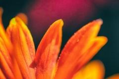 flower-42