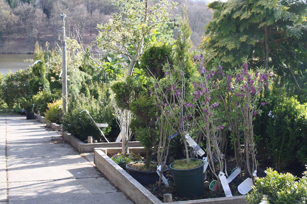 Flemmings Planteskole har mange forskellige planter