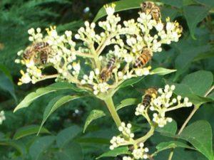 Bijenplanten