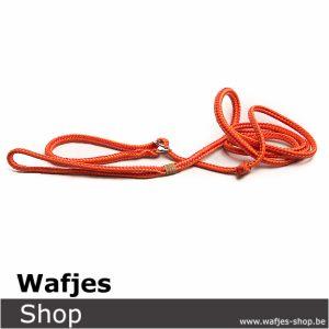 Hondenlijn Orange Stripes 6mm-1