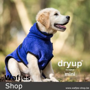 Dryup Cape Blueberry