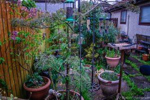 Not garden - a Jungle